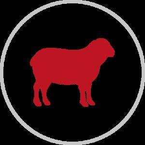 Icone d'agneau - Micha Food
